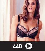 Shape Focus for 44D